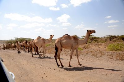 from Isolo to Wajir